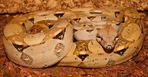 emperor-snake-851945_640